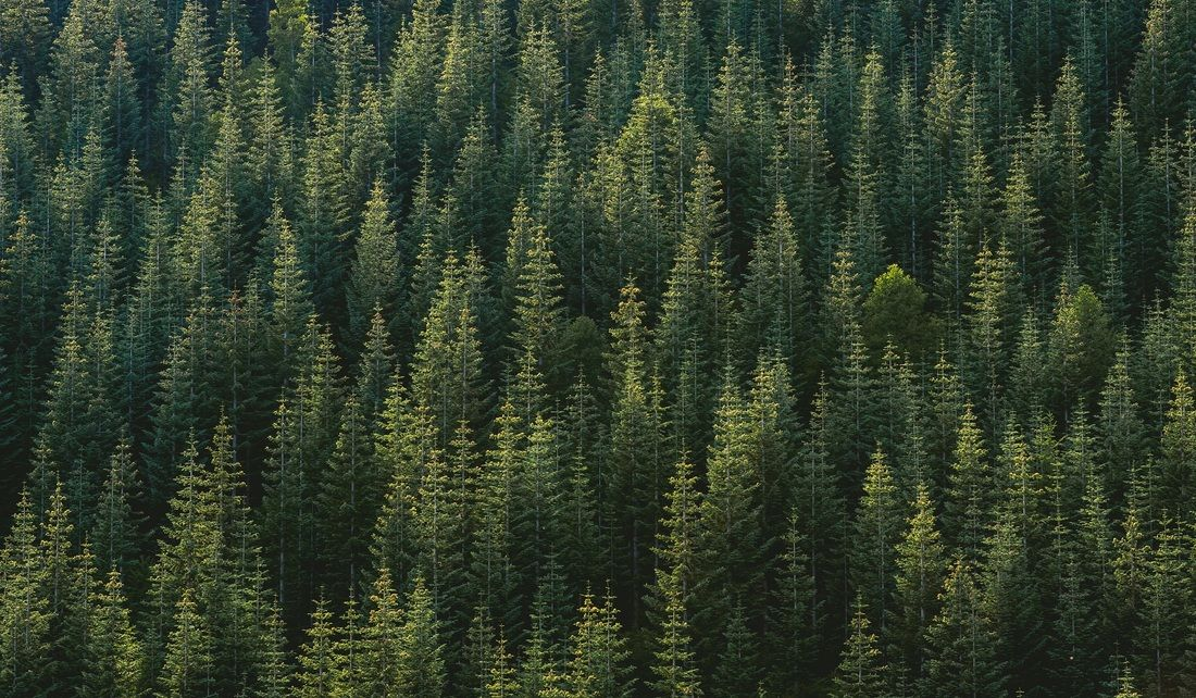 Forestry Consultants and Timber Taxation